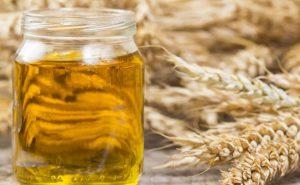Cara memperbesar payudara dengan menggunakan Wheat Germ Oil